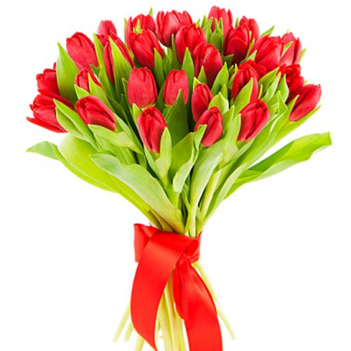 25_tulp-red