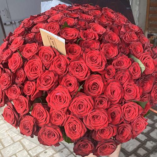 метровые красные розы фото
