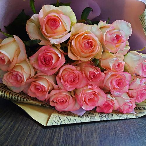 розовые розы Джумилия