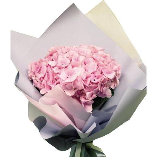розовая гортензия фото